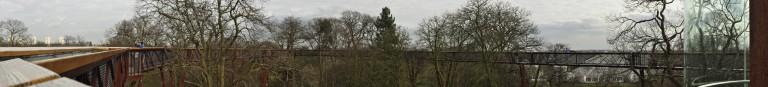 treetops panorama
